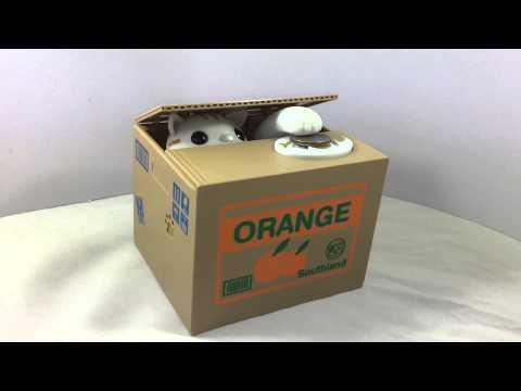 VDO Review กระปุกน้องแมวขี้อาย