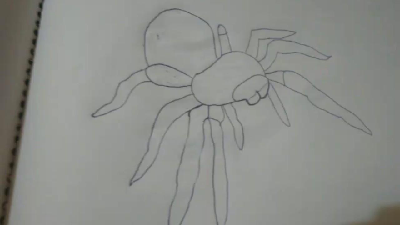 Dibujo 3D tarantula a lápiz y a bolígrafo y color cafe - YouTube