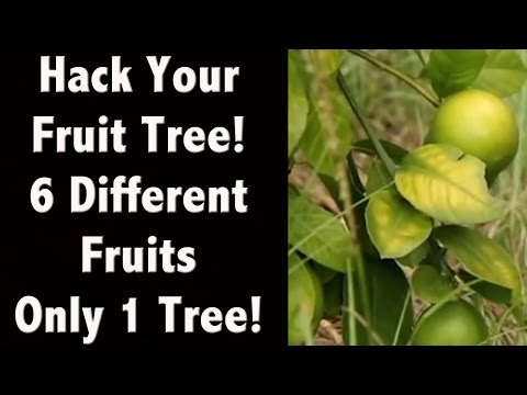 Fruits Just One Tree My Amazing Tree Life Hacks Tips