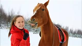 Свободные отношения между человеком и лошадью