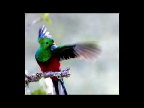 Musica Cristiana de Marimba Dulces Melodias Leonel Reyes