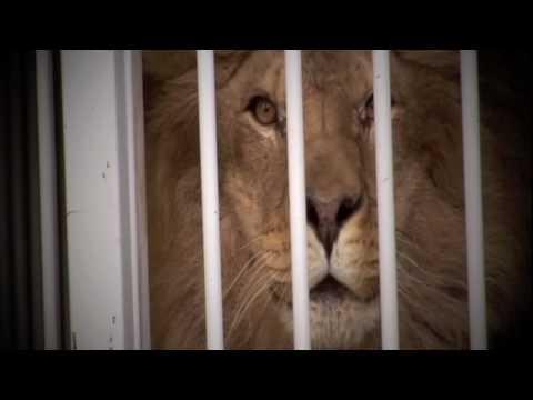 Danko Jones - Below The Belt Promo - Major The Lion