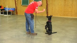Changing Your Dog's Name For Better Or Worse? Master Trainer David Harris Says.....