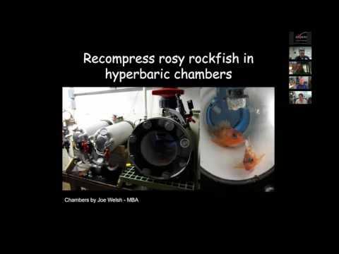 Sea Grant FEN Webinar # 8: Barotrauma: pressure change problems for fish from deepwater