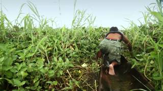 Agusan Marsh Diaries (HD)