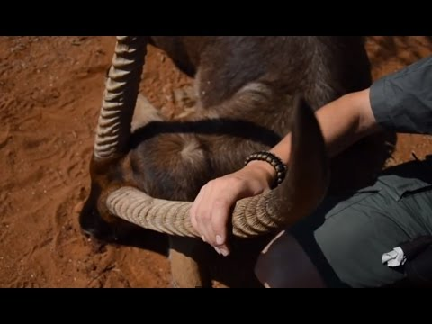 African Waterbuck Hunt with Chad Hall