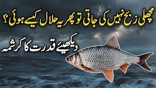 Download lagu Machli Kyun Halal Hai ( Why Fish Halal ) urdu stories | Islamic stories