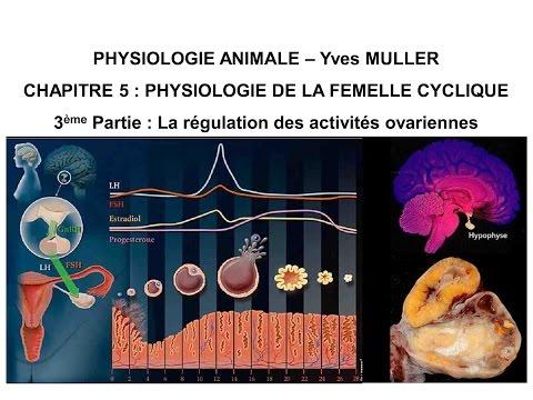 Chapitre 5-3 La régulation des activités ovariennes