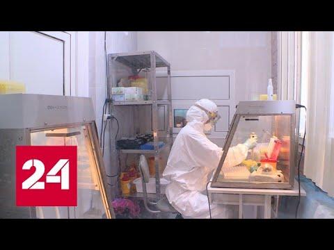 Коронавирус: число зараженных за неделю побило рекорд - Россия 24