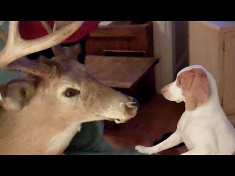 Dog Scared in Deer head Prank : Cute Dog Maymo