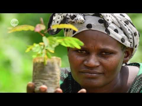 يوم الخدمة العالمي ، يوم الإحتفاء بجهود العاملين في كل القطاعات حول العالم  - 15:01-2020 / 6 / 23