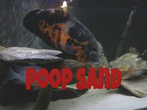 How To Clean Sand In A Fish Tank - The Fishman Method Episode 1