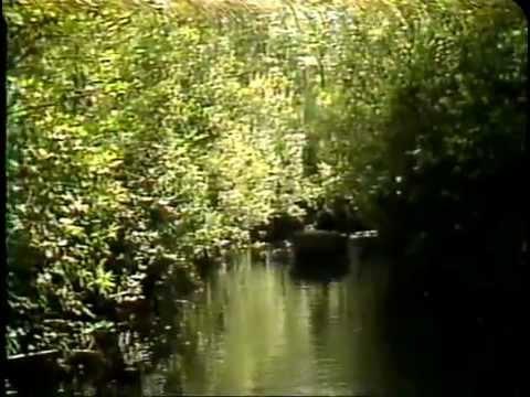 Jean Shepherd's America - Okeefenokee Swamp