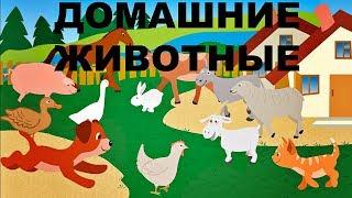 Домашние животные. Как говорят домашние животные? живые звуки животных
