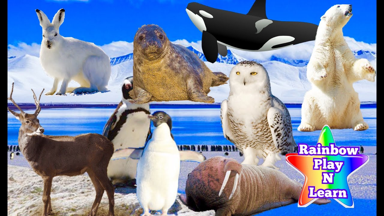 arctic ocean animals list wwwimgkidcom the image kid