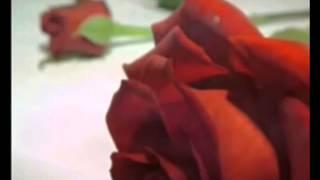 Kutlu Doğum Sinevizyonu 2017 Video