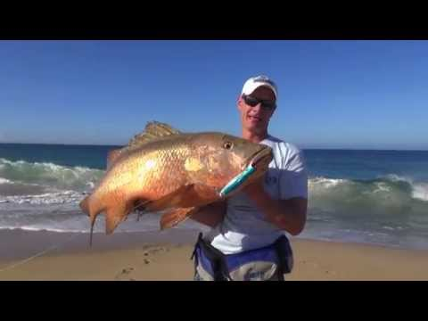 Cabo Beach Fishing 2015