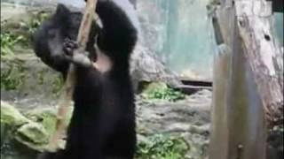 Медведь выделывает приемы кунг фу(JOIN QUIZGROUP PARTNER PROGRAM: http://join.quizgroup.com/ ., 2010-06-01T19:06:50.000Z)