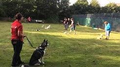 Hundeschule Hannover Land Video