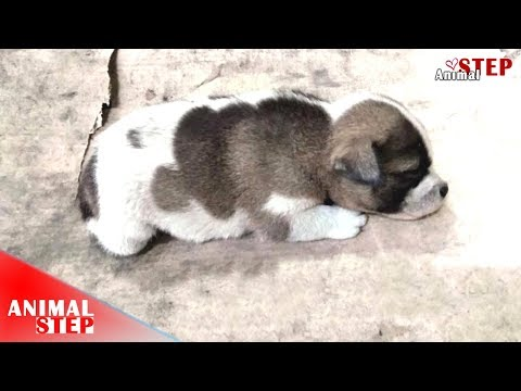 Too Cute! – But He Was Born With Deformed Back Legs
