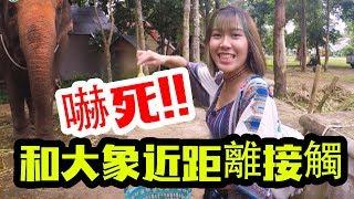 【泰國曼谷考艾旅遊】與大象近距離接觸快被嚇死了!!|泰國考艾 ...
