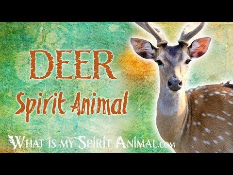 deer-spirit-animal-|-deer-totem-&-power-animal-|-deer-symbolism-&-meanings