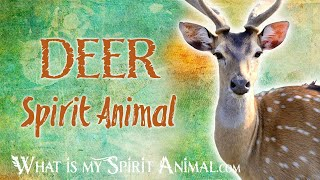 Deer Spirit Animal | Deer Totem & Power Animal | Deer Symbolism & Meanings