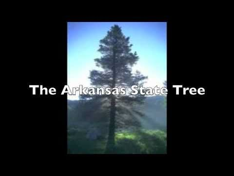 The Arkansas State Tree