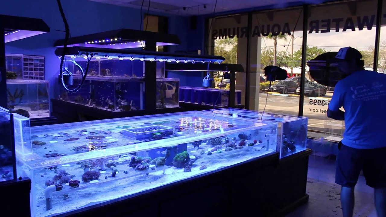 Riley 39 s reef saltwater aquarium store and services for Salt water fish store