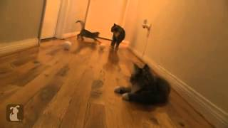 Смешной котенок сильно испугался