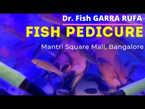 Fish Pedicure, Mantri Square Mall, Bangalore, India   ഫിഷ് പെഡിക്യുർ, മന്ത്രി സ്ക്വയർമാൾ, ബാങ്കളൂർ