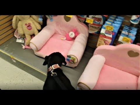 TOY SHOPPING WITH MARLEY !