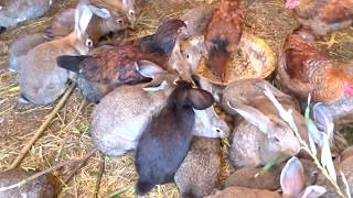 Вольер для кроликов, обзор через месяц