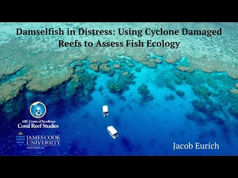 Damselfish in distress: using cyclone damaged reefs to assess fish ecology
