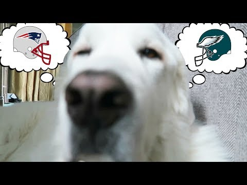 DOGS PREDICT THE SUPER BOWL WINNER! (Super Cooper Sunday #130.5)