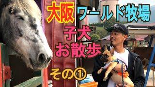 フレブル ロコ 大阪 ワールド牧場が 10月末までワンちゃんが仮装してい...