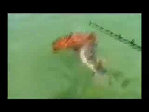 dolphin saves dog from shark attack.. 😱😱😱 - YouTube
