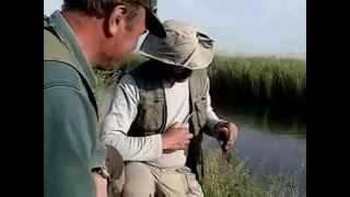 Видео как поймать Линя(Видео расскажет вам о методах ловли линя. В этом видео опытные рыбаки расскажут вам о секретах рыбной ловли..., 2013-01-11T09:30:19.000Z)