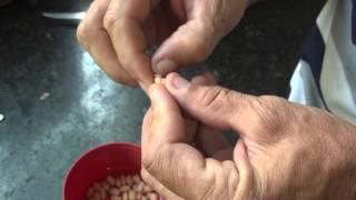 A Verdade sobre o verme do feijão, explicado por Jose Roberto.