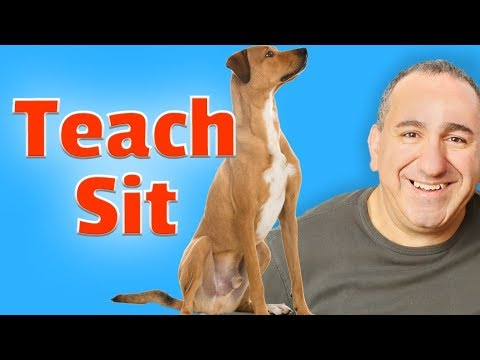 How to train your dog to sit without treats.