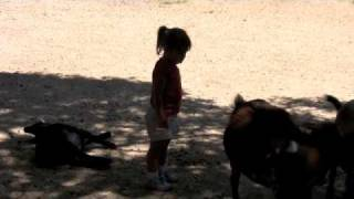 Goats and Potty Training 09