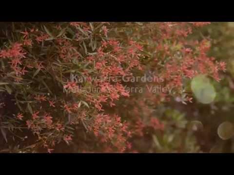 Karwarra Australian Native Plant Garden - Melbourne's Dandenong Ranges