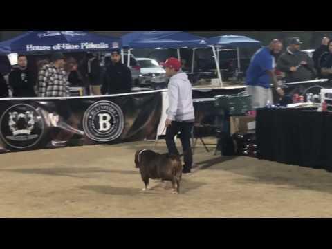ABKC Last Vegas Invitational 2017 - Grand Champion Class Show 1