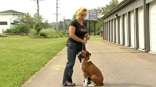Sit / Sit Stay - Easy Dog Training