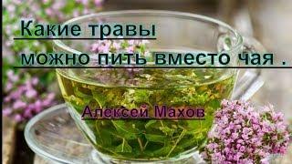 Чай и травы. Какие травы можно пить вместо чая . Алексей Махов