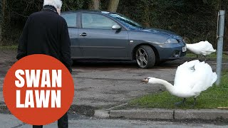 Elderly residents forced to fight off aggressive pair of swans