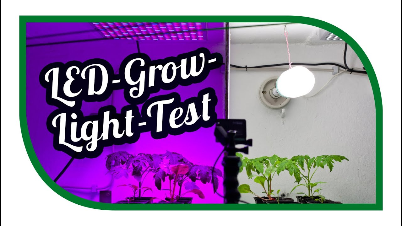 LED Grow Light Test ☀ Aussaat Jungpflanzenanzucht Zeitraffer ...
