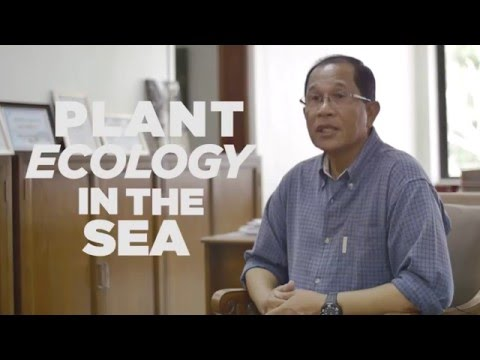 Interview with Dr. Miguel Fortes : Sea Grass Ecology