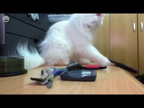 Cats knocking things over | Funny Cats Video Compilation