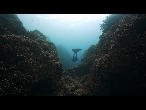 ZAN Trailer